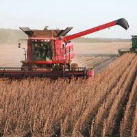 【中国の食料問題①】:ウイルス蔓延で食糧危機が加速か。中共政府が穀物増産を指示。