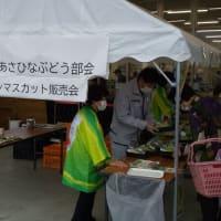 JA新みやぎあさひなぶどう部会でシャインマスカット販売会を開催しました。