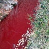 (^^♪~イムジン河、水清くぅ~って嘘か?!ww・・・アフリカ豚コレラ、殺処分の血で川が赤く染まる…韓国