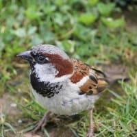 この地球に鳥は何羽いるか?