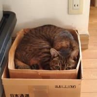 ほんとうに箱が好き♪