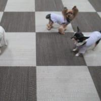 20/03/23 犬の幼稚園BuddyDog