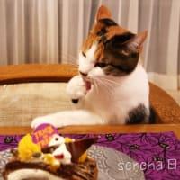 ハロウィンケーキにゃの。
