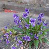 東浅川町の春を探しに散策 2020.4.5