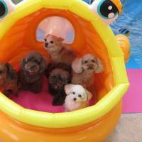 幼稚園体験にきてくれた【太郎くん】  犬のしつけ教室@アロハドギー