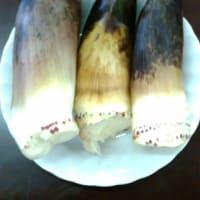 竹の子の収穫