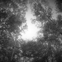 澹の森、園原