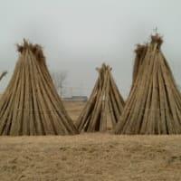 日本の原風景・高槻 「冬の風物詩 鵜殿のヨシ原焼き」