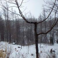 降雪後は強風