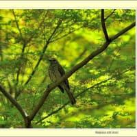 瑞穂公園の野鳥 04/06
