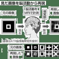 視覚と脳活動