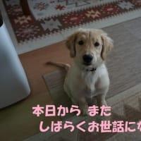 """みんなに内緒にしておくなんて! (一一"""")"""