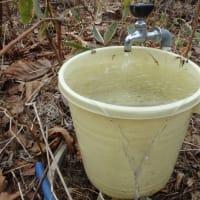 今年も湧き水の水道が出た