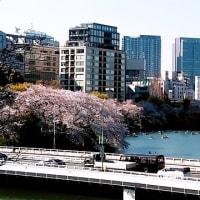 ニュースあれこれ☆「メガネを掛けて、桜を見よう!」