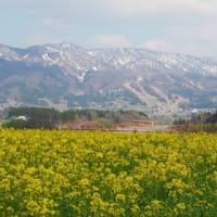 桜は満開☆心も満開になーれ♪(^^)v