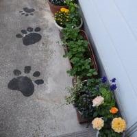 4月25日の庭の花など・・