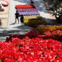 毎年行われている「春の幸せますフェスタ」天満宮大石段に鉢が飾られています!