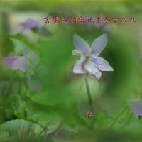 フォト575あそび『 言霊の詞宿せよ冬すみれ 』ywy0103