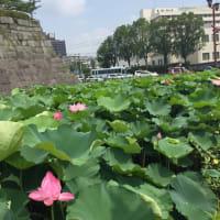 ハスの花☆