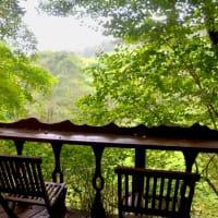 艶やかに濡れる森とデッキ見ながらコーヒー焙煎の一日。