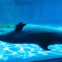 上越市立水族館「うみがたり」