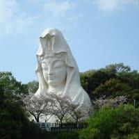 「桜」/大船フラワーセンター