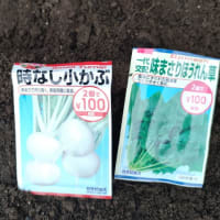 法蓮草の播種(1回目)