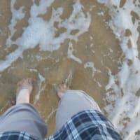 この海にはサバが入っている