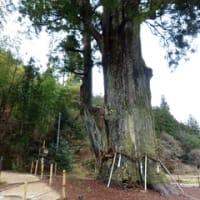 月瀬の大杉での静電位異常