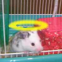 A Hamster Resurrection (ハムスターの復活)
