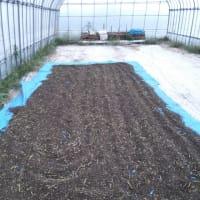 新そばの収穫が始まりました(*^^*)