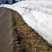 積雪も少なくなってきました。