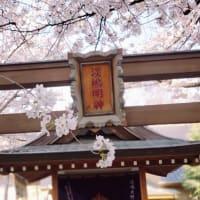 下寺町の隠れ桜の名所 光傳寺 山門にお香を焚いて悪疫退散!