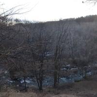雪の無い午後の森を眺めながら冬の上高地の神々しい静寂について話す。