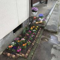 庭作り14玄関編⑩・・・春バージョン完成。