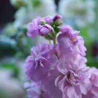 ●我が家の12月の花(7)ポインセチアの造花 ガーデンシクラメン