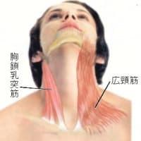 咽喉異常感症(咽頭神経症)の針灸治療・手技療法 ver.2.0