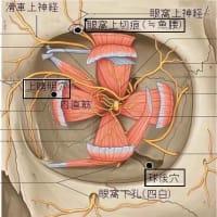 私の行っている眼窩内刺針の方法 ver.1.3