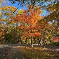 紅葉の効果 Autumn Color