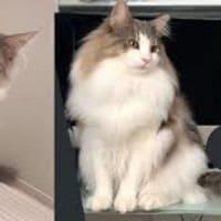 猫の春の抜け毛を聞くようになりましたので、人は抜け毛には騒がないようにしましょう。