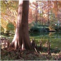 夕暮れの池。 長居植物園。      大阪市・