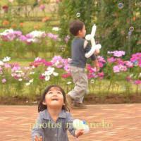 photos mikeneko NO.1