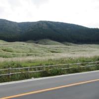 箱根:仙石原のススキは少し青かったです