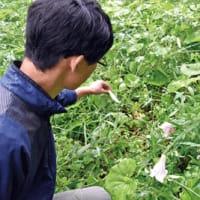 日高川町  日本一の公園目指すも獣害深刻 美山のササユリ今年も咲かず… 〈2019年6月14日〉