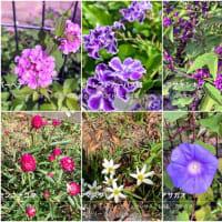 花の名前を調べてみよう