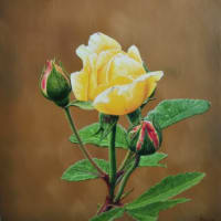 <薔薇>油彩画:親友が運営する岡山市[ギャラリー深学舎]で展示販売‼️