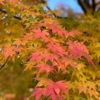 秋的慣例活動