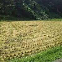 山間の田圃の稲刈り・・・今年は天候が不順でしたが、なんとか昨日作業終えたとたん・・・今日は雨!お手伝い頂いた方々に感謝!