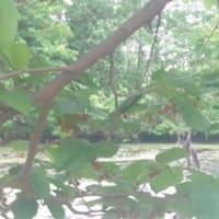 雨宮処凛がゆく! 第485回:『つみびと』から、大阪二児置き去り死事件を思う。の巻