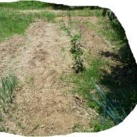 夏野菜の畝を耕す